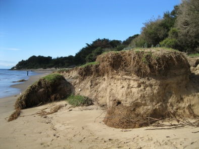 Much of the erosion at Portsea beach has been attributed to changing wave patterns due to more water in the bay following the dredging of 2008 (Photo: Dept Environment & Primary Industries via flickr)